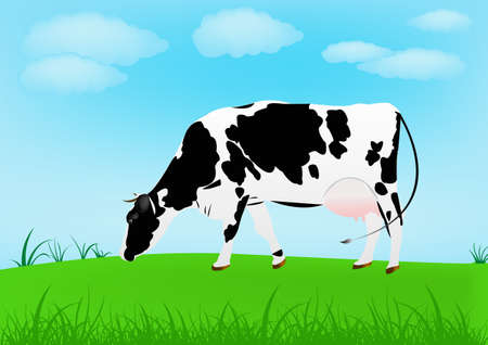 land mammals: Cow over spring green meadow