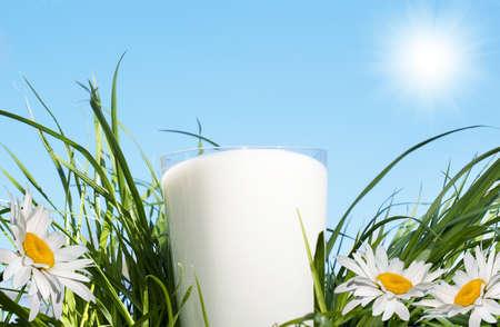 milk products: Fresh glass milk over green grass background