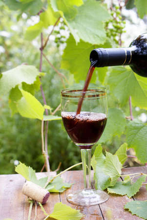 Red wine bottle, glass, young vine and bunch of grapes against green summer background photo