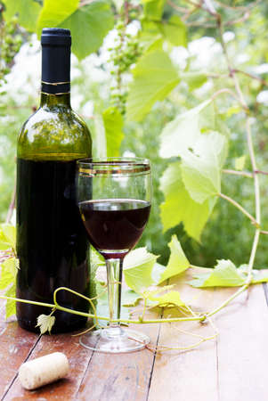 Red wine bottle, glass, young vine photo