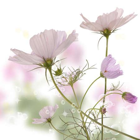 The beautiful spring flower Standard-Bild