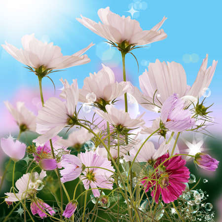 The decorative flowers upon solar green meadow photo