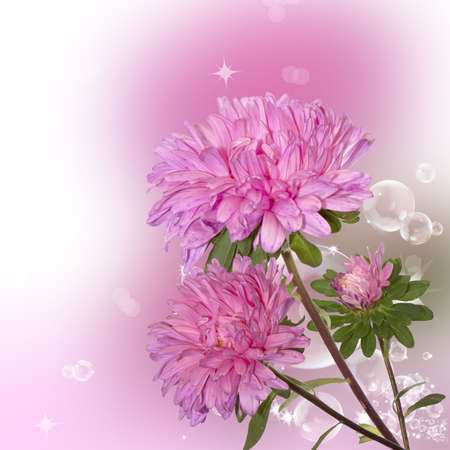 text pink: Pink decorative autumn flowers over abstract background Stock Photo
