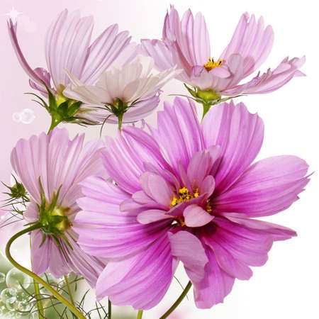 Flower decorative border Stock Photo
