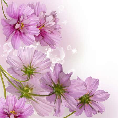 Flower decorative border photo