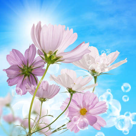 Beautiful pink decorative flowers on a sky blue background photo