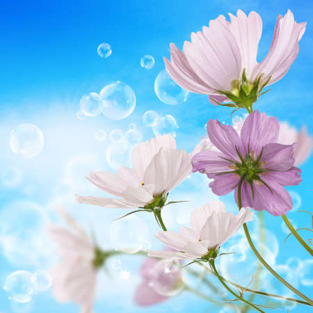 Decorative garden flowers upon blue sky background photo