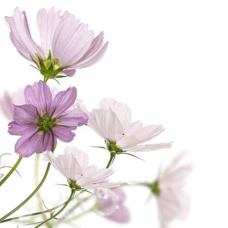 flores exoticas: Flores decorativas de jard�n