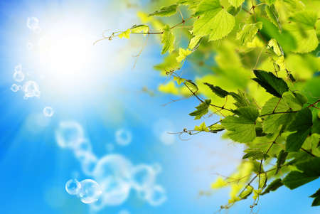 Nature solar spring background photo