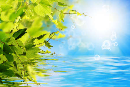 Nature solar summer background photo