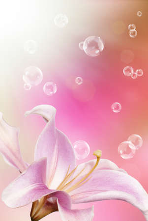 Pink decorative beautiful flower lily on a blurred abstract light pink background photo