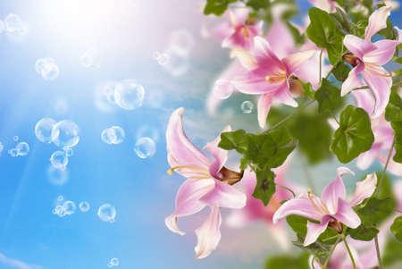 Flores de verano naturaleza exótica de sol