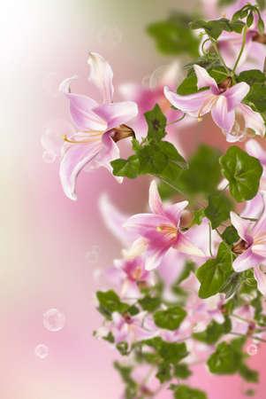 Beautiful pink exotic flowers flora design stock photo picture and beautiful pink exotic flowers flora design stock photo 15961551 mightylinksfo