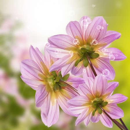 flores exoticas: Flores ex?ticas naturaleza Verano soleado