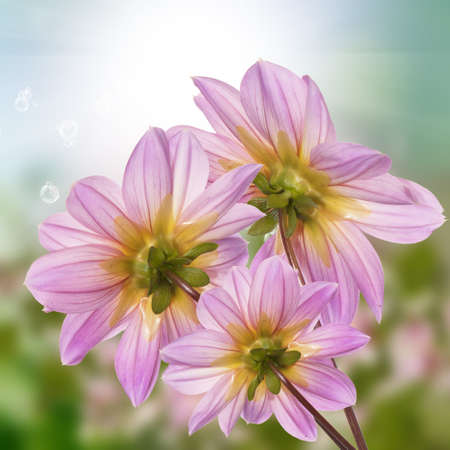 flores exoticas: Flores ex�ticas naturaleza Verano soleado