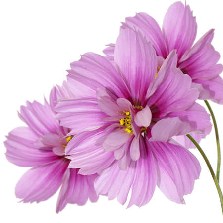 flores exoticas: Ex?tica flora flores tarjeta