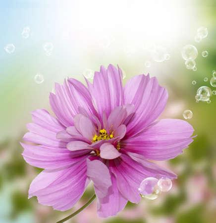 flores exoticas: Ex�tica flora flores tarjeta