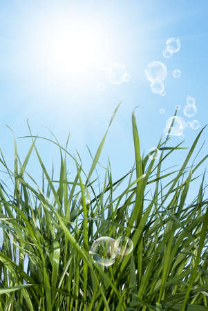 The young spring grass on the background of blue sunny sky photo
