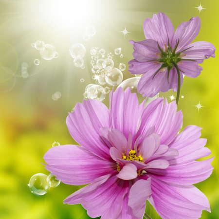jardines con flores: Exótica flora flores tarjeta