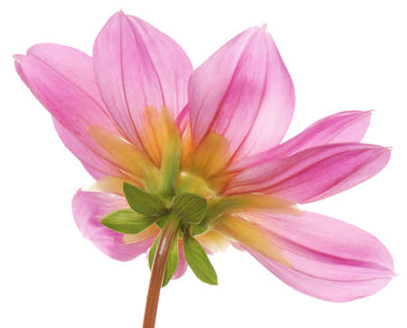 exotic flower: Decorative pink exotic flower