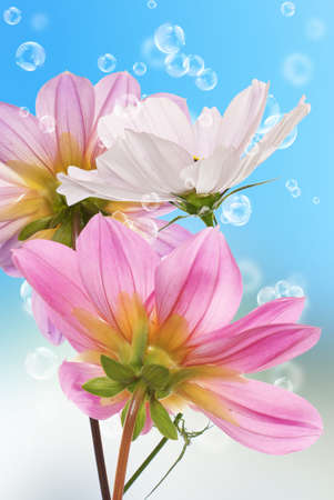 Beautiful flowers card Floral background photo