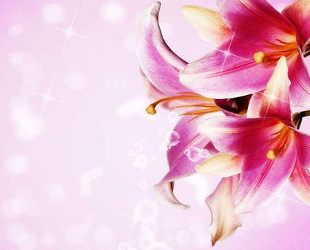 flores exoticas: Hermosa flores Tarjeta rosa lirio Foto de archivo