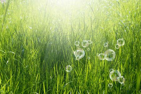 Spring nature background Green grass Standard-Bild