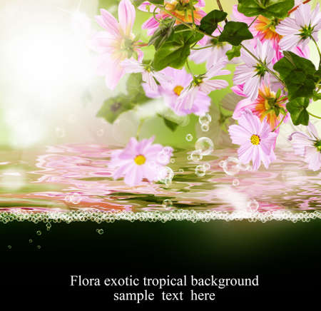 Exotic tropical flora flora tarjeta photo