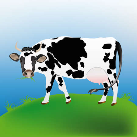 Dairy cow over spring green meadow Agriculture Stock Vector - 16624496
