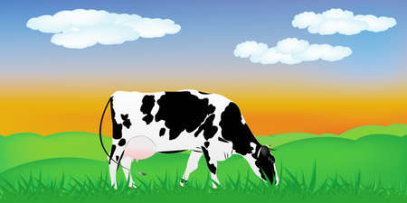 Dairy cow over summer green meadow The rural landscape photo