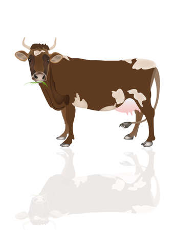 cattle grazing: Dairy cow over white background Vector illustration