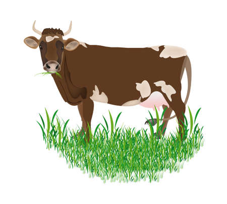 Dairy cow over white background Vector illustration Stock Vector - 16624521