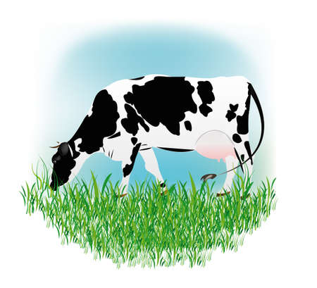 graze: Dairy cow over white background Vector illustration