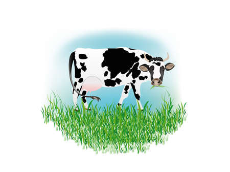 Dairy cow over white background Vector illustration Stock Vector - 16624529