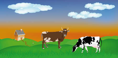 Dairy cows over summer green meadow The rural landscape Stock Vector - 16661339