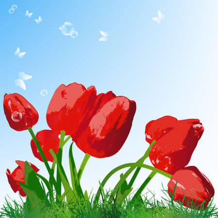 Beautiful red tulip on a green grass Vector