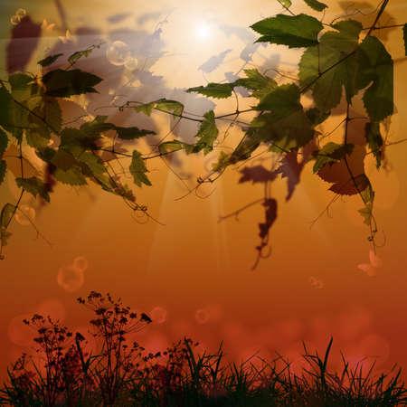 sundown: Nature season background