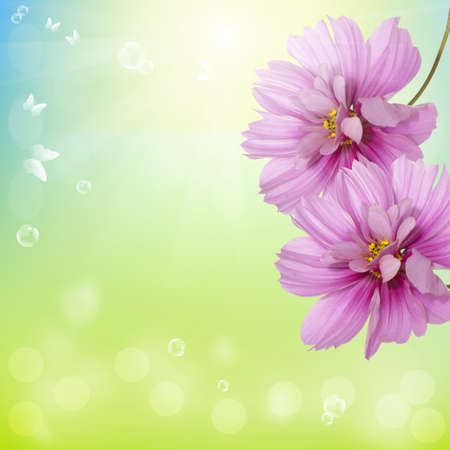 Summer  beautiful flower Nature season photo