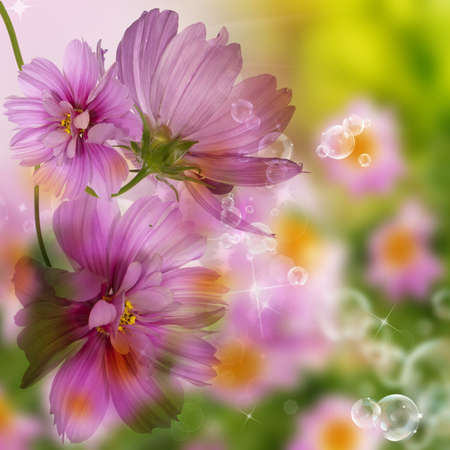 Flower beautiful border Nature background photo
