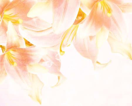 Beautiful flower background  photo