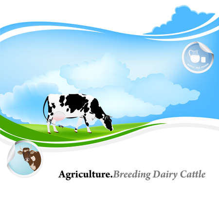 cows grazing: Agriculture Breeding dairy Cattle background Illustration