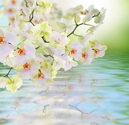 flora: Flowers water Japanese Orchid Beauty Flora card