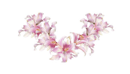 circlet: Holidays Circlet of Flowers Exotic Pink Beautiful Lily on white background Stock Photo