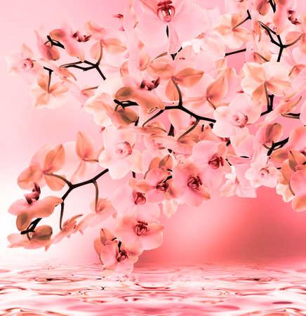 flores exoticas: Orqu�deas florecientes ex�ticas