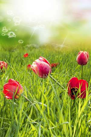 Red Garden Tulips Happy Easter photo
