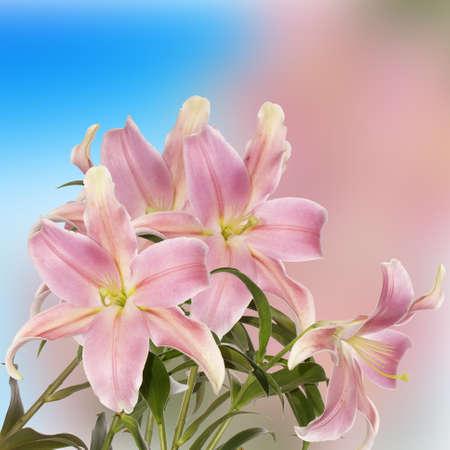 Lily Flower beautiful card photo