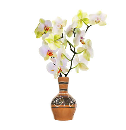 vase: Vintage retro ceramic vase with flowers orchid on a white background Stock Photo