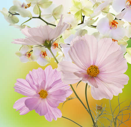 flowers background: Beautiful flowers on abstract background