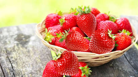 Innovative technology of growing large-fruited strawberry round on the Dutch technology Stock Photo