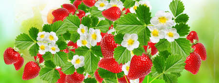 Red tasty strawberries 免版税图像